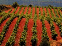 bobals, estol verd, winery, bodega, rodonyà, nicely coloured earth
