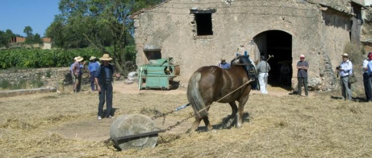 Cabra: el Segar