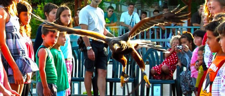 Workshop on raptors