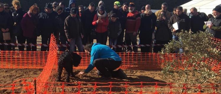 Feria de la trufa negra y concurso de perros truferos en Vilanova de Prades, 12 de enero