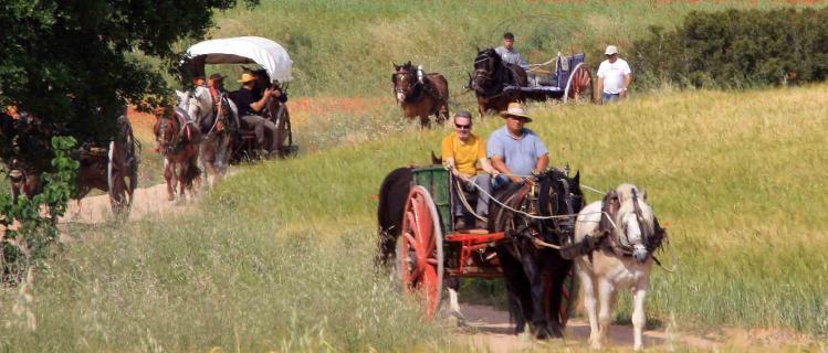 Experiències Rurals - rutes en carro